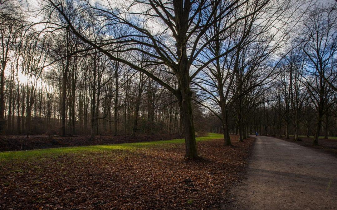 Waarom wandelen helpt om je stress te verlagen
