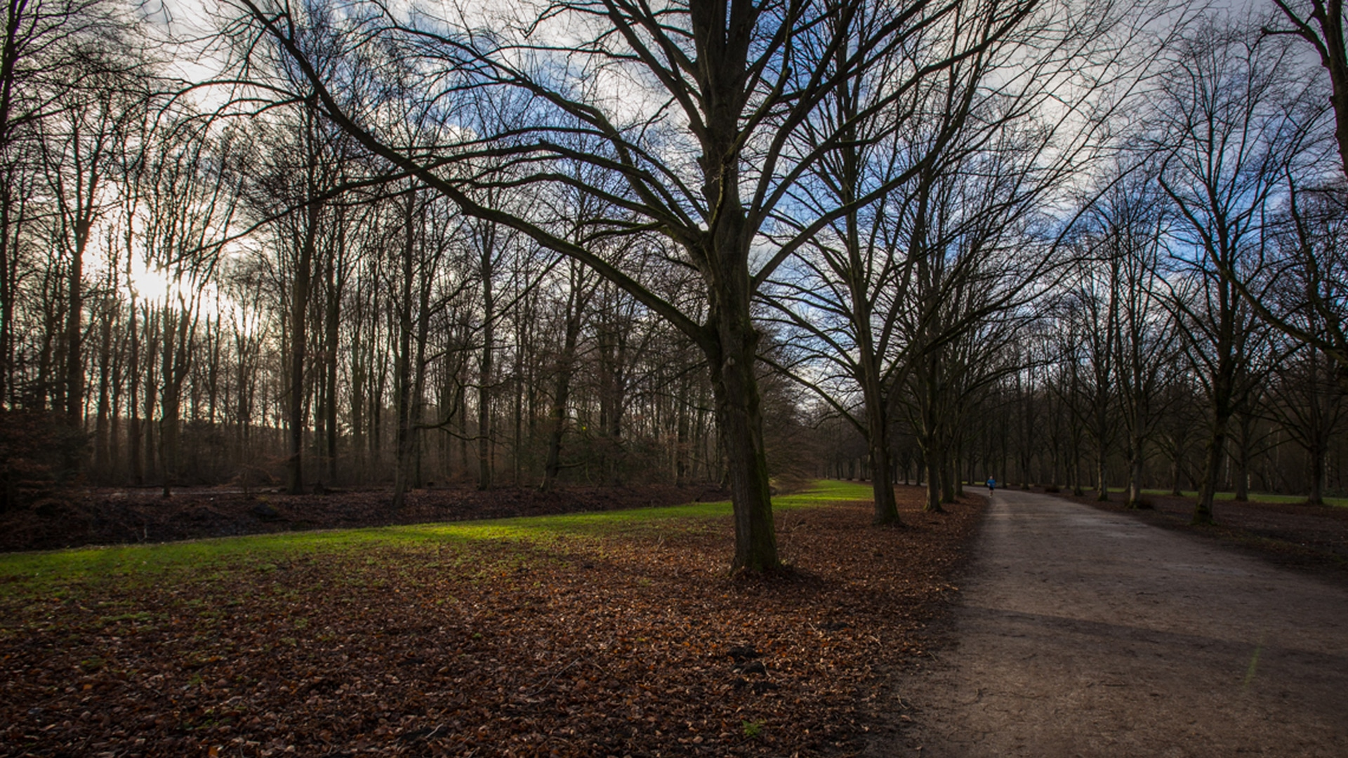 Wandelen in het Amsterdamse Bos